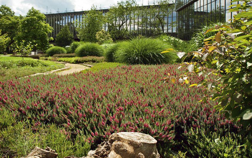 Garten- und Landschaftsbau: Im Grünen arbeiten