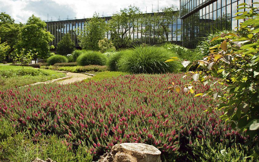 Garten- und Landschaftsbau: Garten- und Landschaftsbau : Im Grünen arbeiten