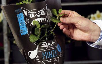 """""""Schnauze voll!"""" – das Marketing-Konzept für Gartenkräuter"""