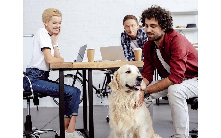 Kollege Hund: Willkommen im Team
