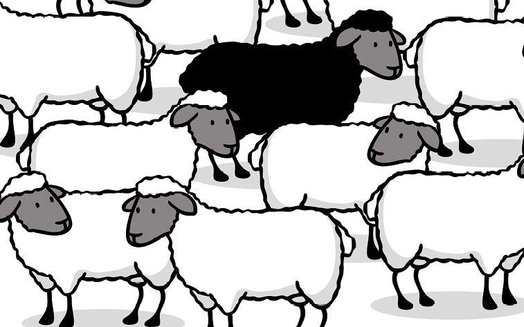 Finanzberater: Wie erkennt man Schwarze Schafe?