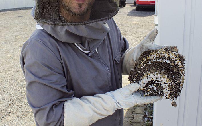 Schädlingsbekämpfung vom Profi. B. Ebeling-Musliu berät Sie gern