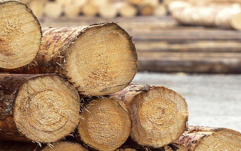 Holz: Der natürliche Baustoff