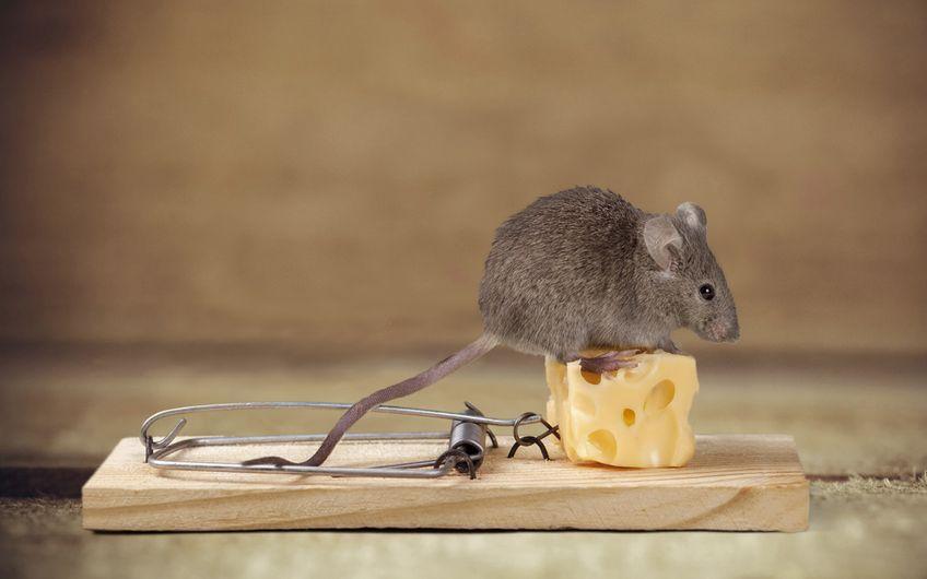 Schädlingsbekämpfer: Schädlingsbekämpfung  ist Vertrauenssache