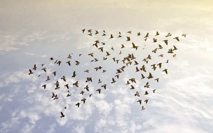 Teams entwickeln: Die Basis heißt Vertrauen