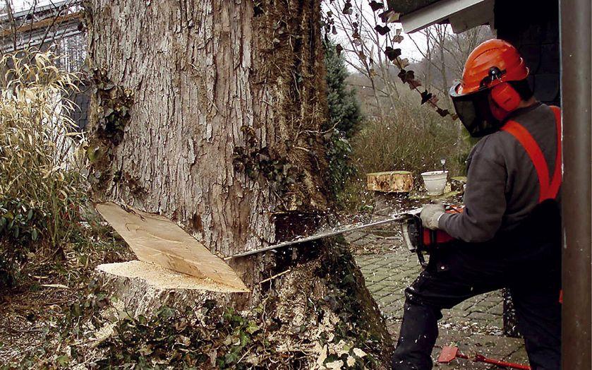 """Pauli. Garten + Forstbetrieb: """"Astreine Qualität"""" zu jeder Jahreszeit"""