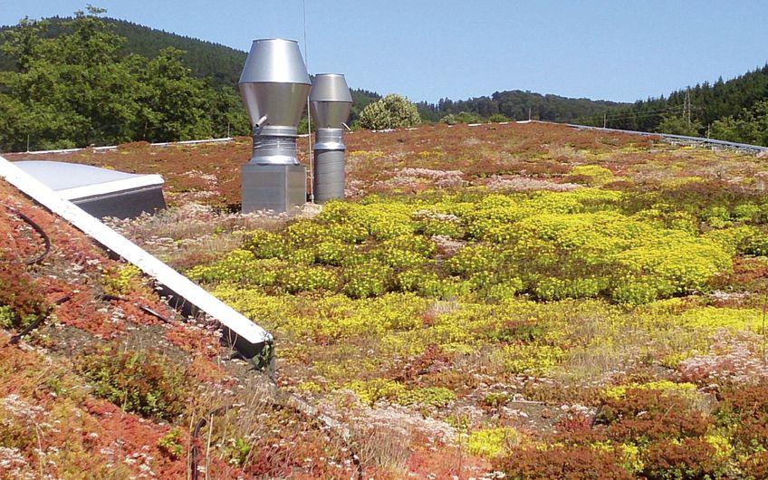 Neue Lebensräume  für Flora und Fauna auf dem Dach