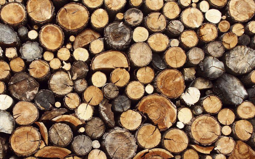 Die größten Holzbauer im Ruhrgebiet