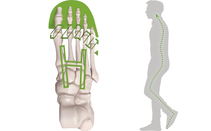 Asymmetrische Zehenschutzkappe, biomechanisch optimierte Flexzone in der Laufsohle und dort integriertes biomechanisches H-Kopplungselement: So fördert das patentierte und preisgekrönte go&relax-System eine gute Fußdynamik; das wirkt sich positiv auf die gesamte Körperstatik aus